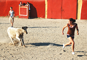 A small bull chases Stephanie in Spain. http://www.enjoy-europe.com/BullFlight-s.jpg
