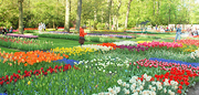 A small portion of the magnificent flower garden at Keukenhof, Lisses, Holland. http://www.enjoy-europe.com/MorePatches-s.jpg